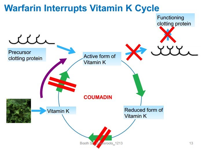 vitamin k when on coumadin